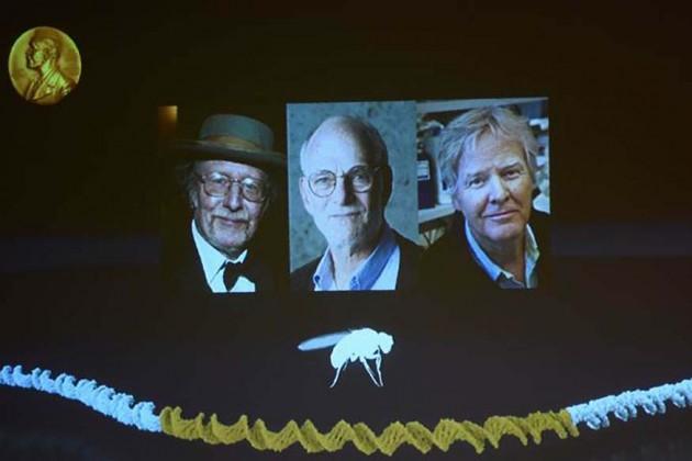 চিকিৎসায় নোবেল পাচ্ছেন আমেরিকার তিন বিজ্ঞানী