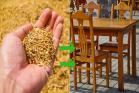 ধানের খোসা থেকেই তৈরি হবে বাড়ির আসবাব, IIT খড়গপুরের চার ছাত্রের আবিষ্কারে চমকাবেন আপনিও