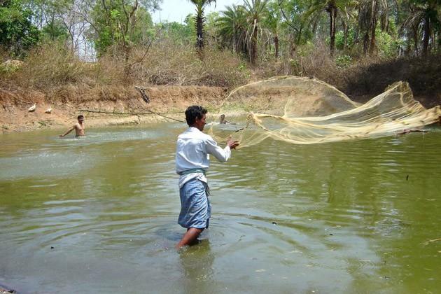 পুকুরে মাছ ছাড়াকে কেন্দ্রকরে গুরুতর আহত এক,অগ্নিগর্ভ অশোকনগরের কামারপুর এলাকা