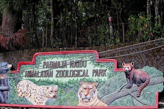 মোর্চার বনধে অভুক্ত রয়্যাল বেঙ্গল টাইগার থেকে স্নো লেপার্ড