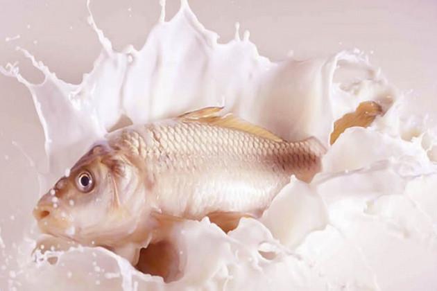 মাছ আর দুধ কি একসঙ্গে খাওয়া উচিত? জেনে নিন
