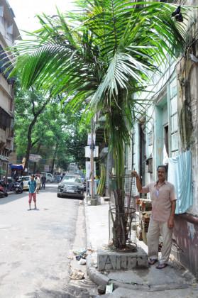 Kolkata-Tree-Lover-Amit-Nath-Hazra-279x420