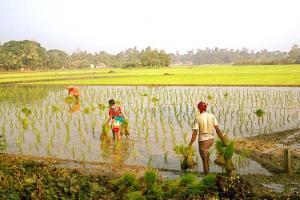 কৃষকদের মুখে ফুটবে হাসি, কৃষিঋণ বেড়ে ₹১২ লক্ষ